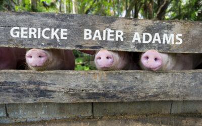 The Three Little Spy Pigs
