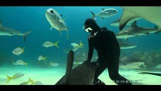 Video Wednesday — 333 Nina Salerosa, The Shark Whisperer