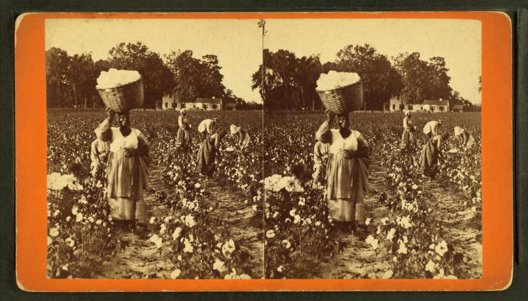 Cotton Was King Until Slavery Was Outsourced